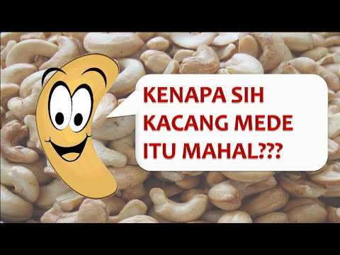 Proses Pengolahan Kacang Mete atau Mede (by Aryu Nuts)