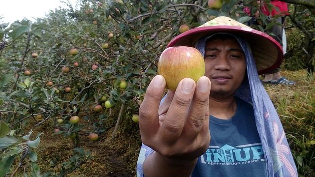 ekonomi pertanian desa