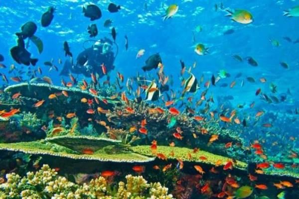 keindahanbawah laut sebagai potensi kemaritiman indonesia
